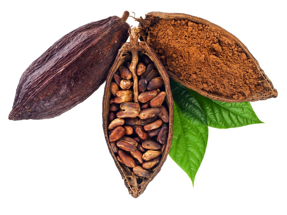 czekolada kakaowiec